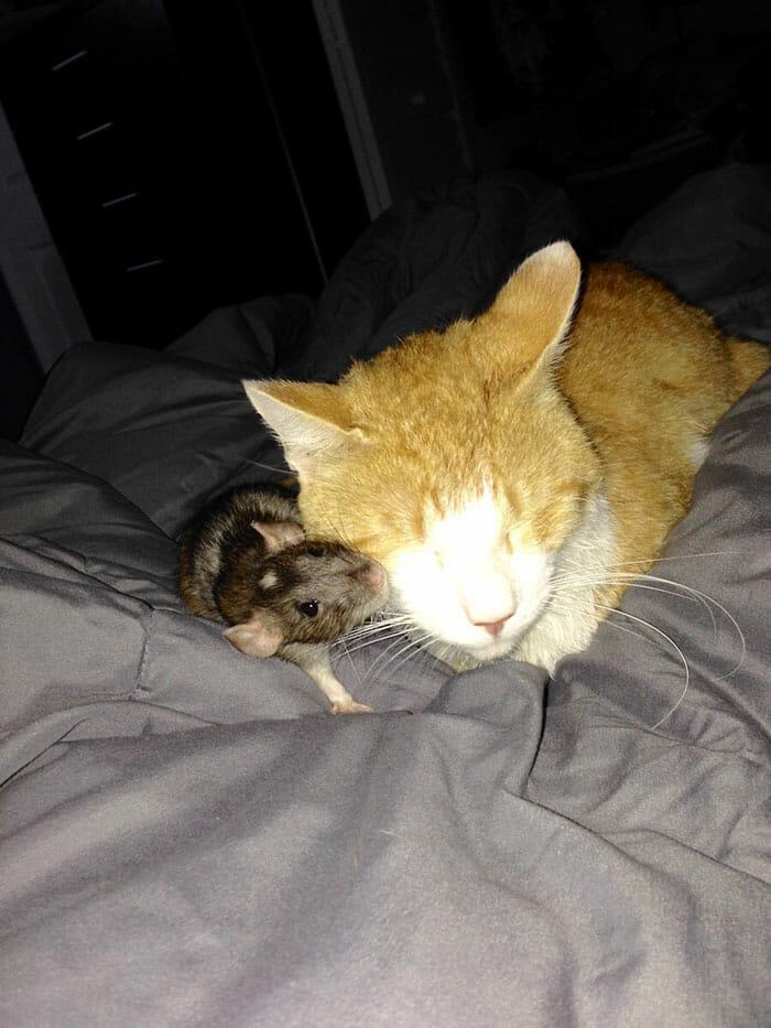 gatos-ratos-amigos_10
