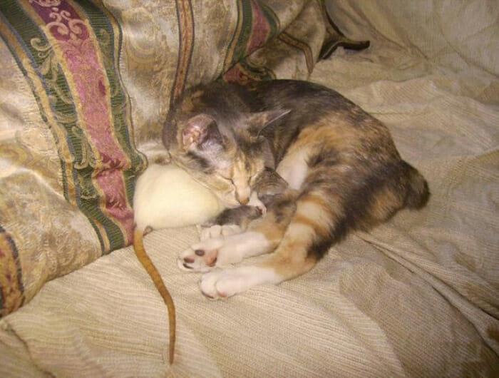 gatos-ratos-amigos_17