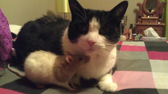 gatos-ratos-amigos_19