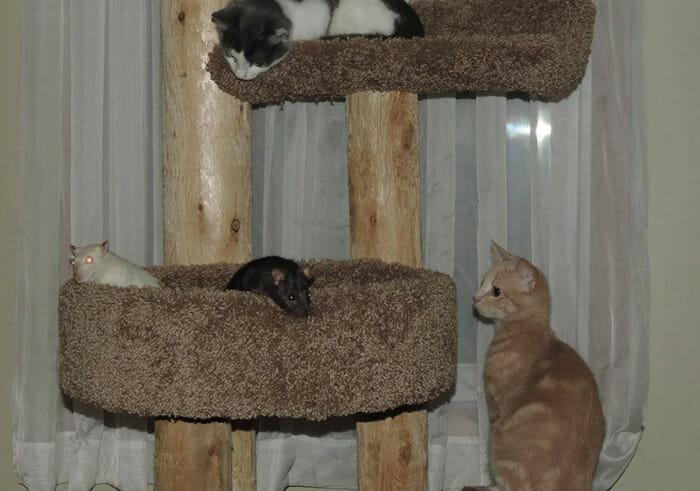 gatos-ratos-amigos_4