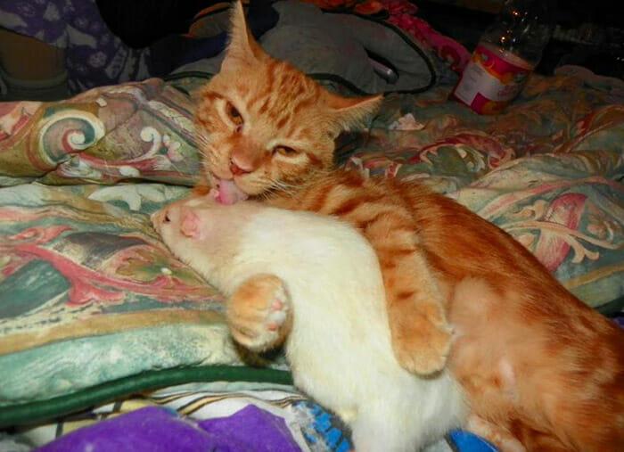 gatos-ratos-amigos_7