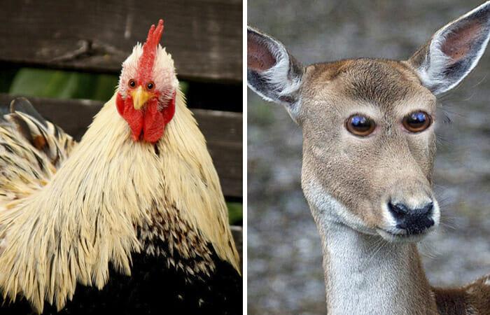 animais-olhos-invertidos