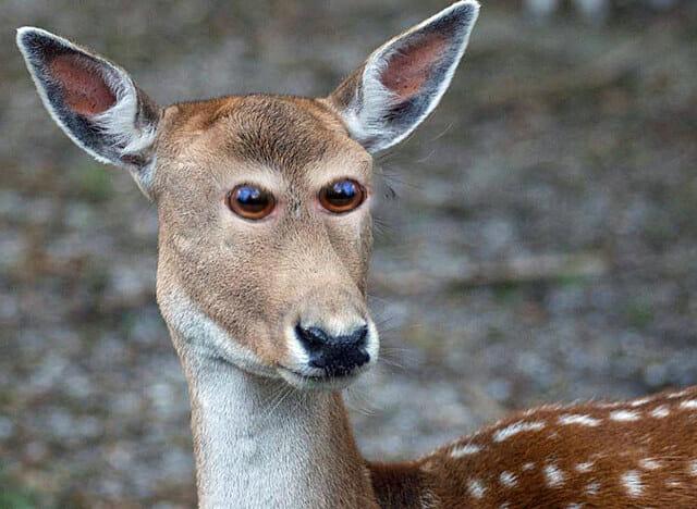 animais-olhos-invertidos_1