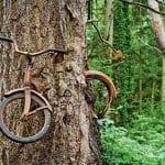 Natureza vs. Civilização: 15 Imagens Incríveis de Árvores 'Engolindo' Objetos