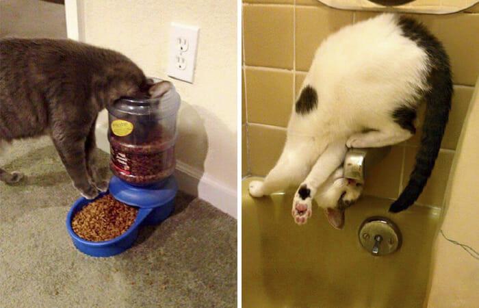 gatos-estranhos