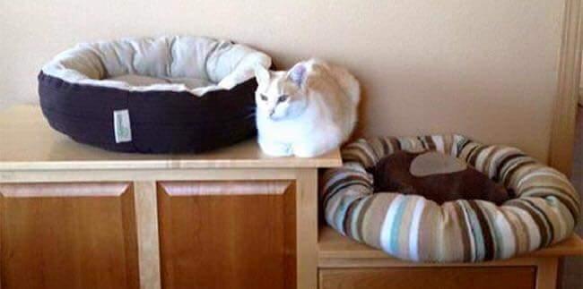 gatos-estranhos_10