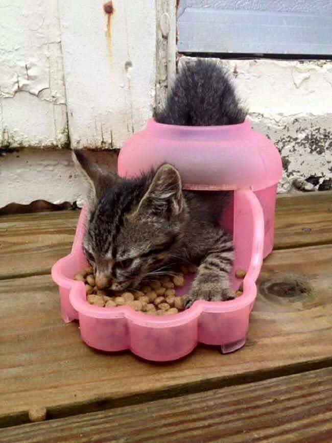 gatos-estranhos_12