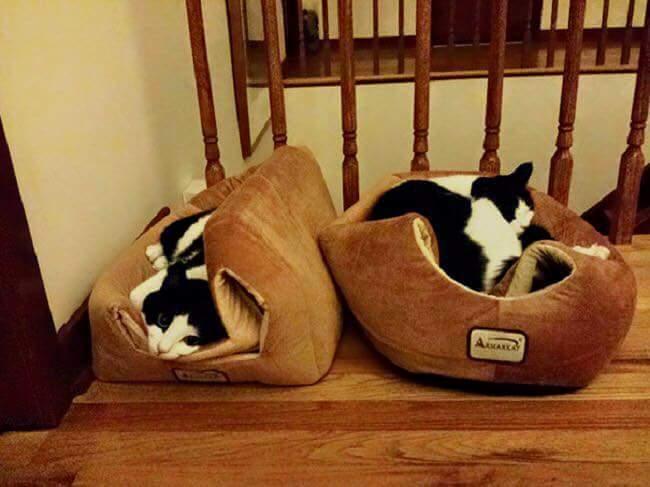 gatos-estranhos_2