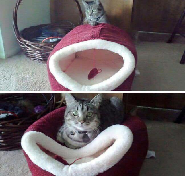 gatos-estranhos_6