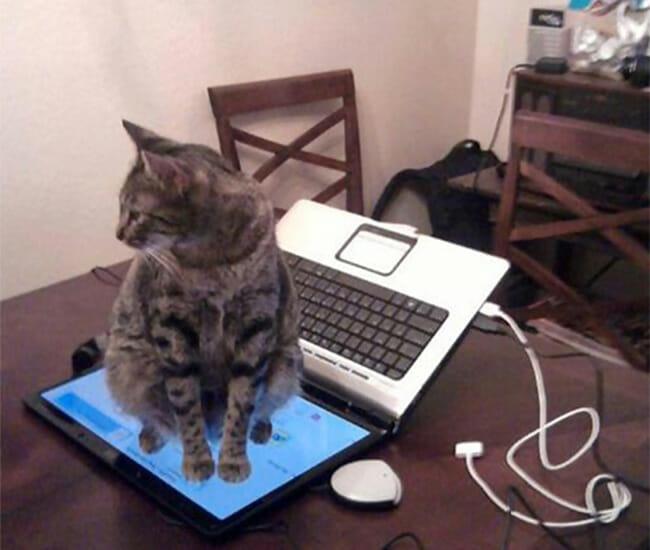 gatos-estranhos_8