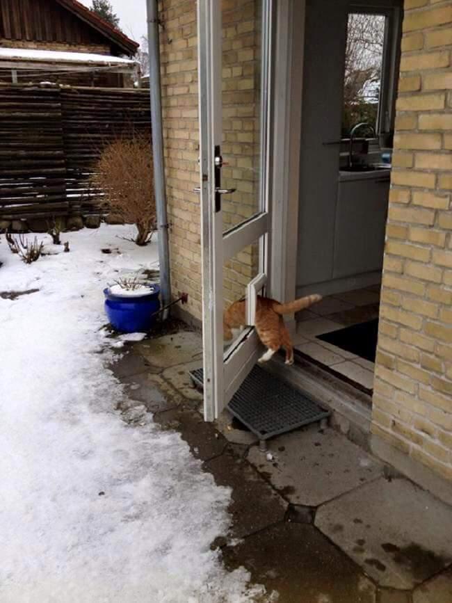 gatos-estranhos_9