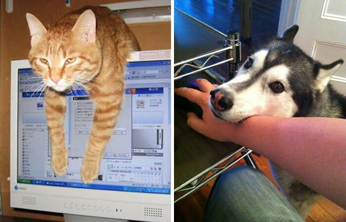 pets-vs-computadores