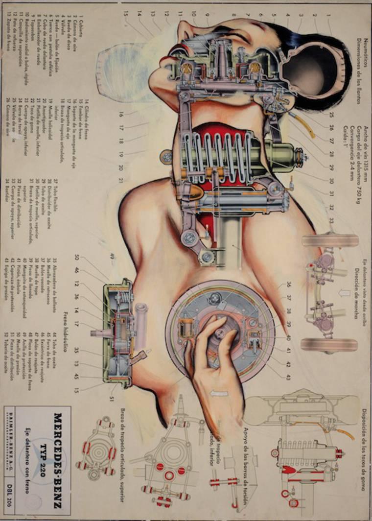anatomias_2