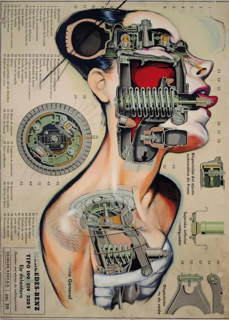 anatomias_7