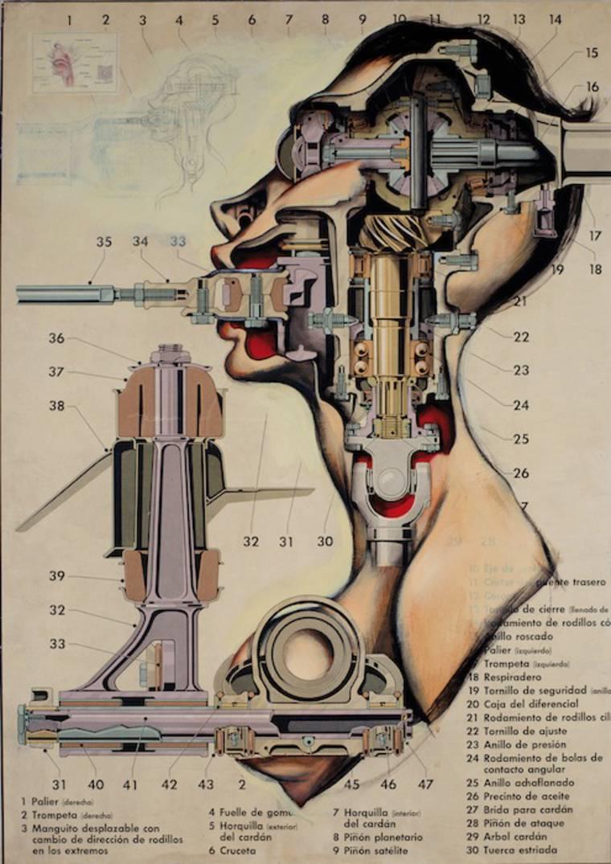 anatomias_9