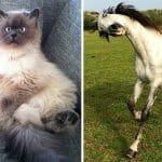 36 Fotos Divertidas De Animais Que Definitivamente Não São Fotogênicos
