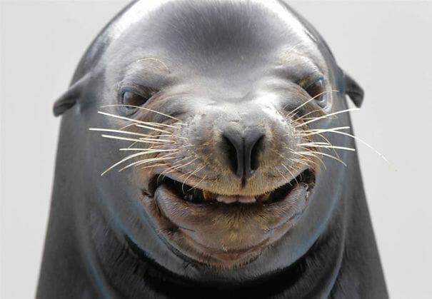 animais-fotogenicos-sqn_15