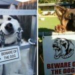 As 21 Placas De Cão Bravo Mais Mentirosas Que Existem