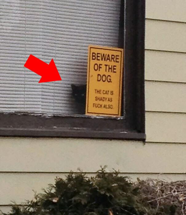 """Legenda: """"Cuidado com o Cão. E o Gato é Sombrio também."""""""