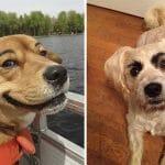 12 Cachorros Com Sobrancelhas Que Fazem O Maior Sucesso Entre A Cachorrada
