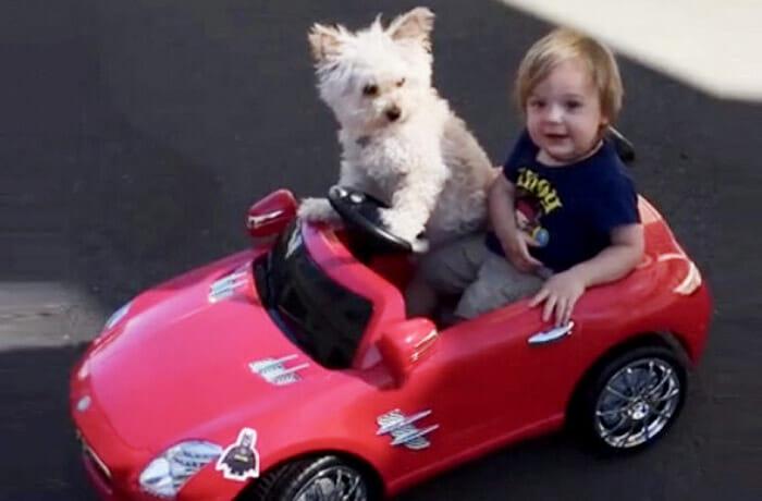 gifs-cachorros-melhores-amigos