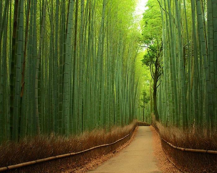 E se... As Vegetações De Nosso Planeta Fossem Azuis Ao Invés De Verdes?
