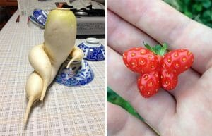 79 Frutas e Vegetais Com Formatos Tão Estranhos Que Farão Você Olhar Duas Vezes