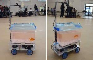 Estudantes Inventam Aquário Robótico Com Movimentos Controlados Pelo Próprio Peixe