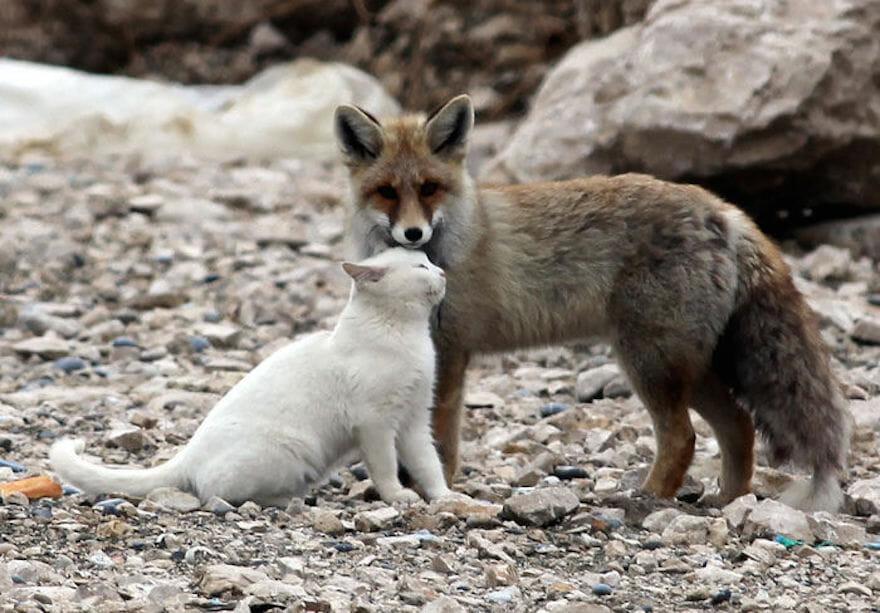 21 Amizades Raras e Improváveis Que Aconteceram No Reino Animal