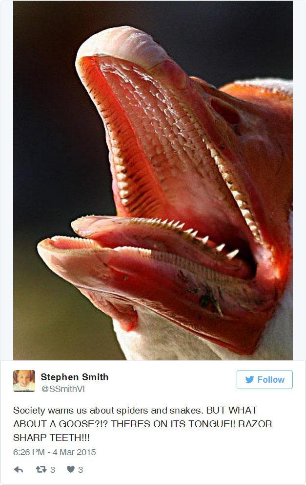 18 Imagens Horripilantes De Bocas De Animais e Insetos Que Farão Você Ter Pesadelos