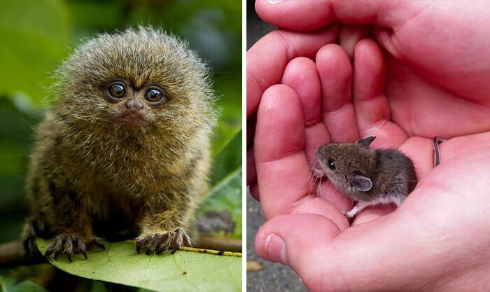 16 Fotografias De Filhotes De Animais Que Vão Te Matar De Fofura