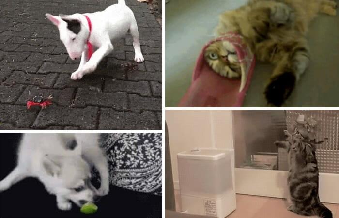 15 GIFs Engraçados de Animais Lutando Contra Coisas Inofensivas