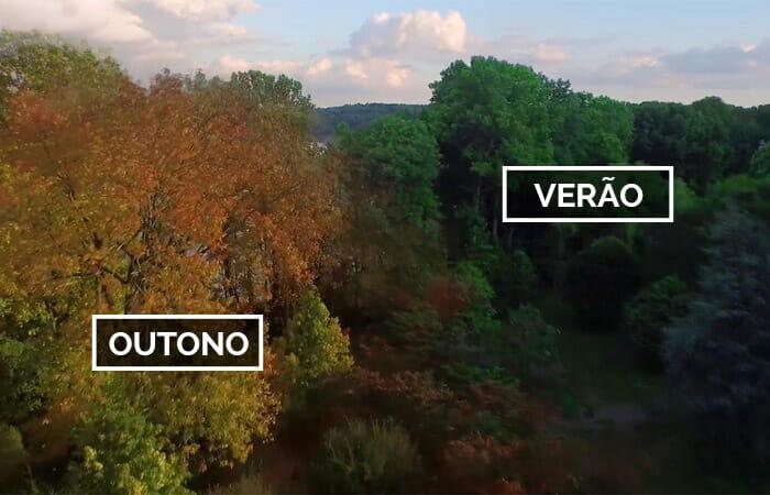 Vídeo Incrível Capturado Por Drone Compara O Quanto A Natureza Muda Durante As Estações Do Ano