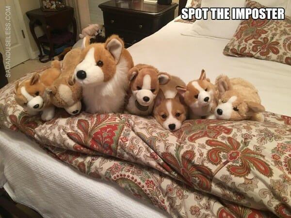 Ache o Intruso! 16 Imagens Engraçadas de Pessoas, Animais e Objetos Intrometidos