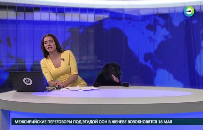 Cachorro Aparece No Jornal Ao Vivo e Surpreende Repórter na Rússia