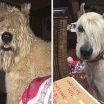 20 Imagens Divertidas De Cachorros Antes e Depois da Tosa - Parte II