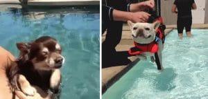 19 Gifs De Cães Adoráveis Que Pensam Que Estão Nadando