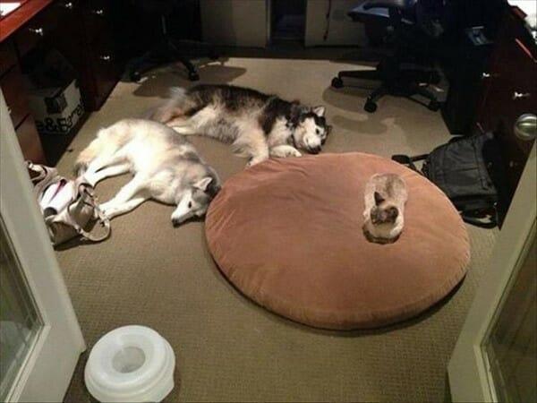 19 Imagens Hilárias Que Provam Que Quem Manda Na Casa São Os Gatos