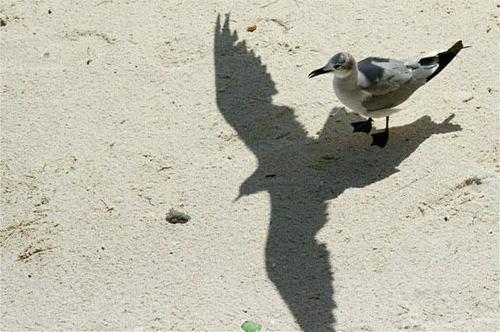 25 Vezes em que Sombras se Transformaram em Imagens Incríveis