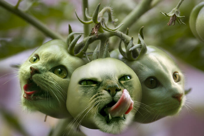 Mestres do Photoshop Transformam Animais em Plantas e os Resultados são Bem Interessantes