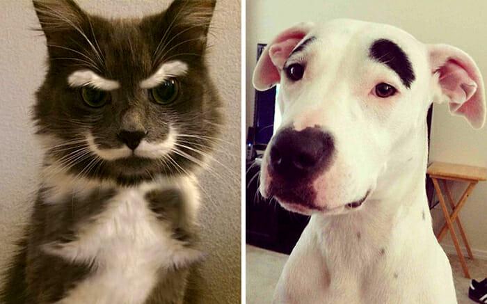 16 Fotos de Animais Provam que a Natureza tem Ótimo Senso de Humor