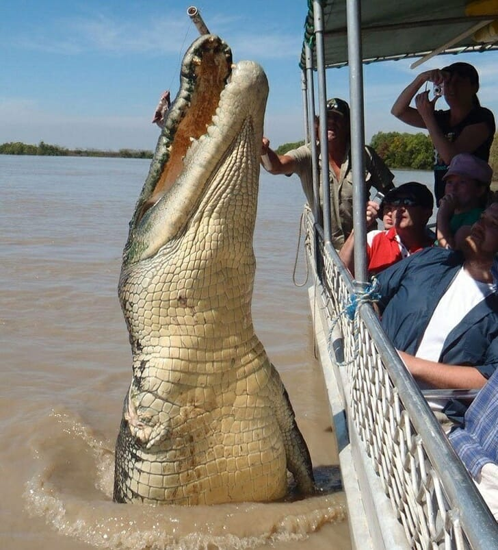 Animais muito grandes - Crocodilo gigante