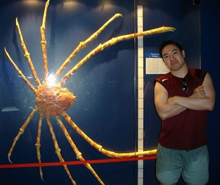 Animais muito grandes - caranguejo gigante
