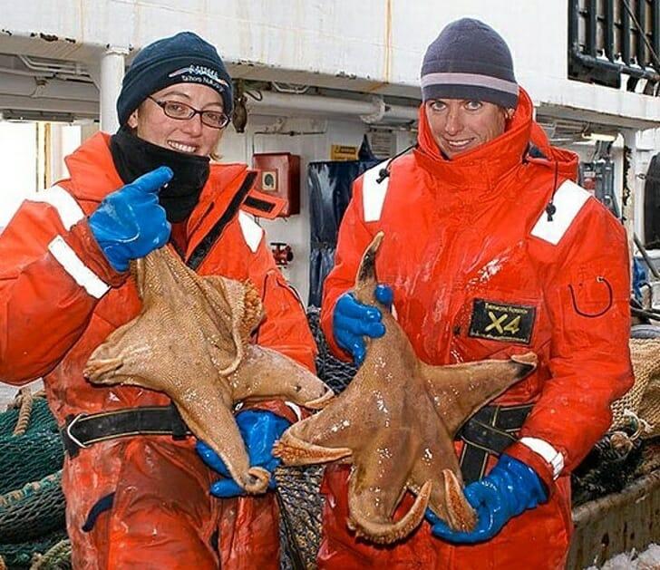 Animais muito grandes - Estrelas do Mar Gigantes