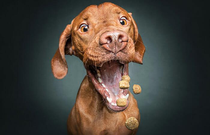 Cachorro comendo petisco