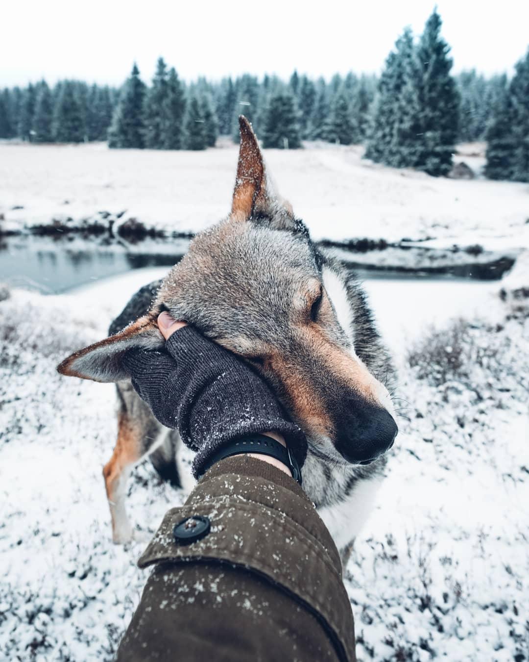 37 Fotos Perfeitas De Um Cão Lobo Em Cenários Incríveis