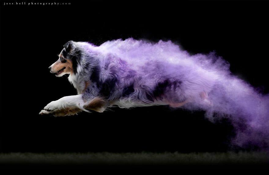 Fotógrafa Polvilhou Pó Colorido Sobre Cães Em Movimento e As Imagens Ficaram Incríveis