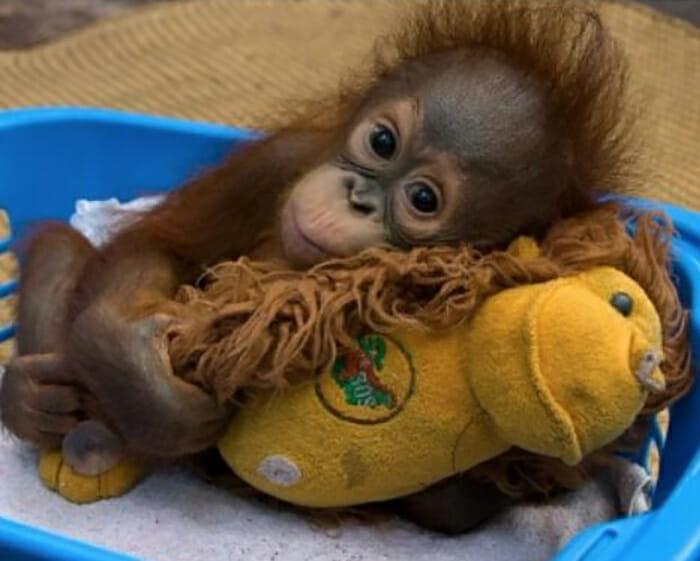 Como lidar? 28 Animais Com Seus Brinquedos Favoritos