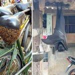 30 Vezes em Que Coisas Estranhas da Natureza Assustaram Alguém