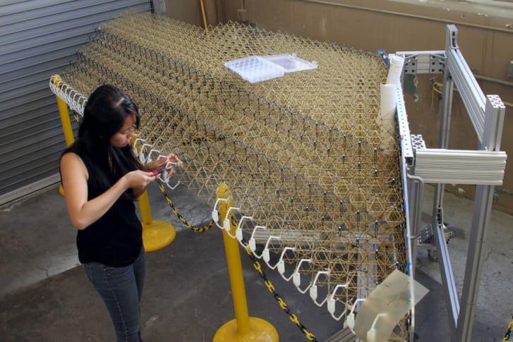 NASA Cria Avião Com Asas Iguais de Pássaros
